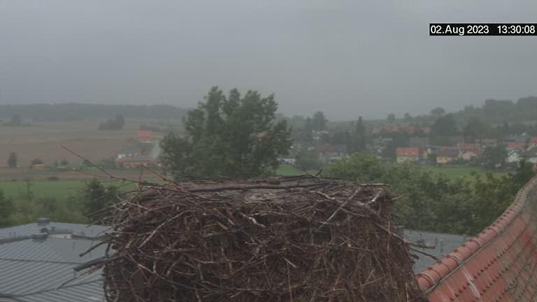 Weißstorchcam
